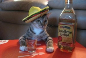 See?  It's a cat.  In a hat.  (No, eff YOU!!)